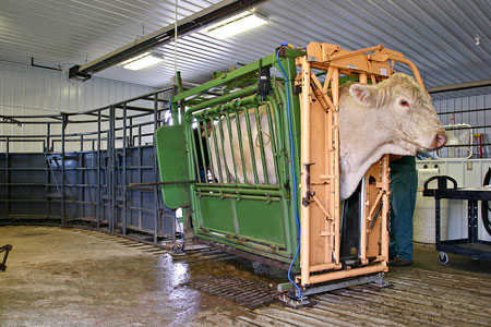 Photo Gallery Changing The Face Of Rural Veterinary Medicine