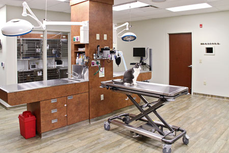 hospital design people 39 s choice award winner melrose animal clinic