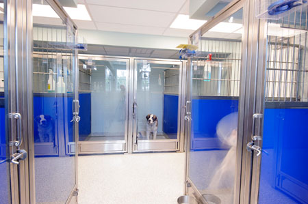 Veterinary hospital kennel/ward