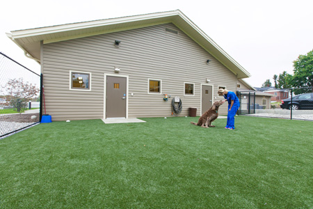 Veterinary hospital exercise yard