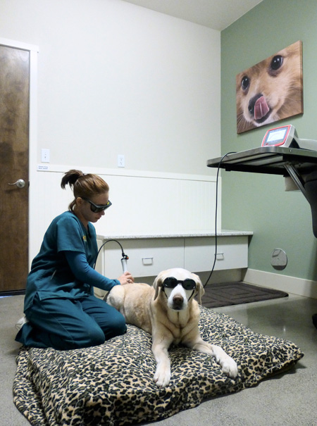 Veterinary hospital surgery suite