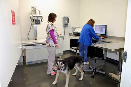 Veterinary hospital hydrotherapy