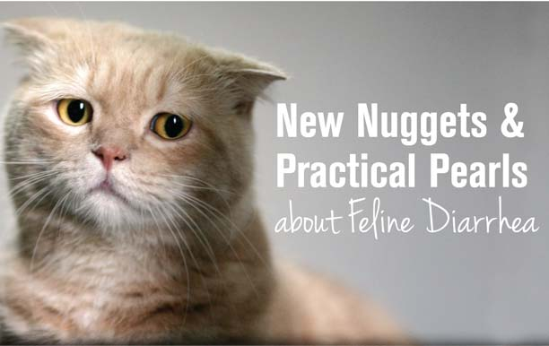 New Nuggets & Practical Pearls About Feline Diarrhea